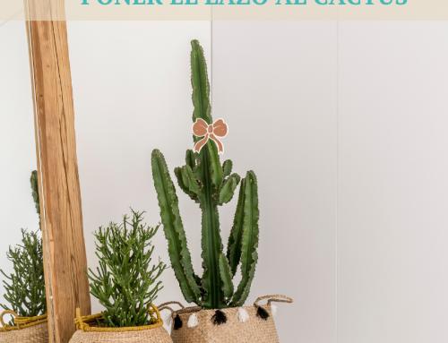 Vivir con bienestar es posible si sabes cómo poner el lazo al cactus